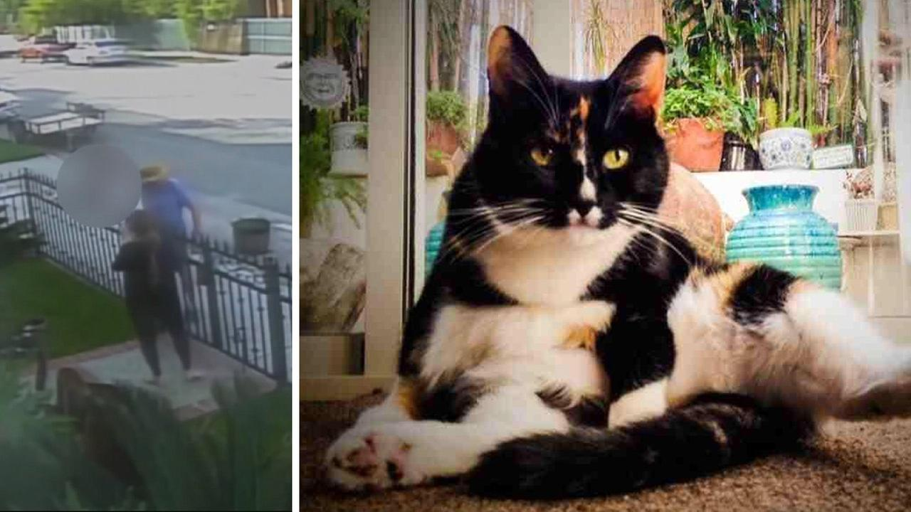 A pet owner and an entire neighborhood are outraged after a pair of dogs attacked and killed Sally, a beloved family cat.
