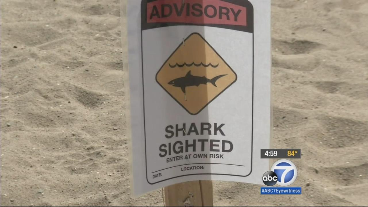 Two juvenile white sharks were spotted off the coast of Seal Beach, which prompted hazard warnings along the beach.