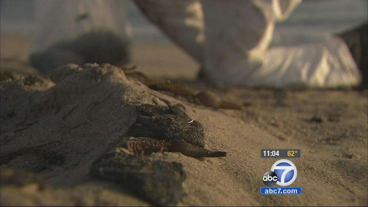 Globs of an oil-like substance closed the Manhattan, Hermosa and Redondo Beach coastlines Wednesday as several agencies worked to determine the source of the petroleum product that washed ashore.