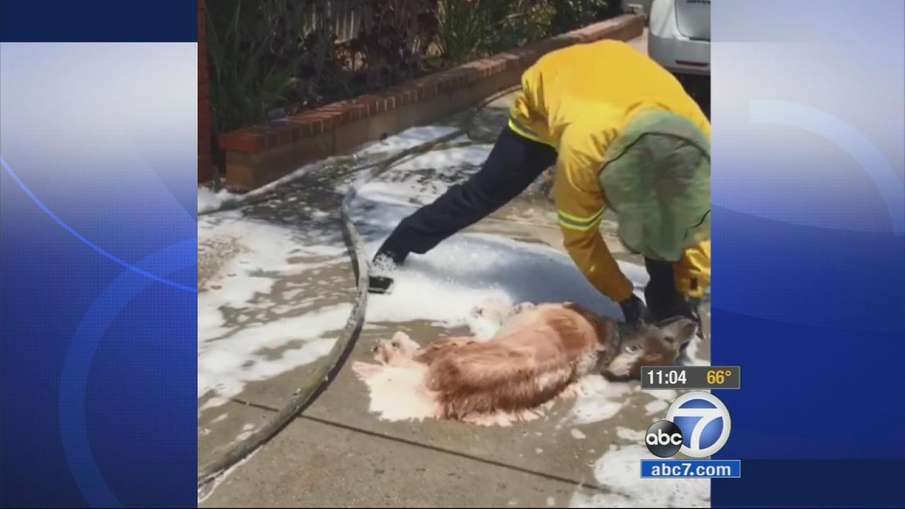 Bees attacked a 43-year-old man who was giving his dog a bath in their Loma Linda garage on Sunday, July 5, 2015.