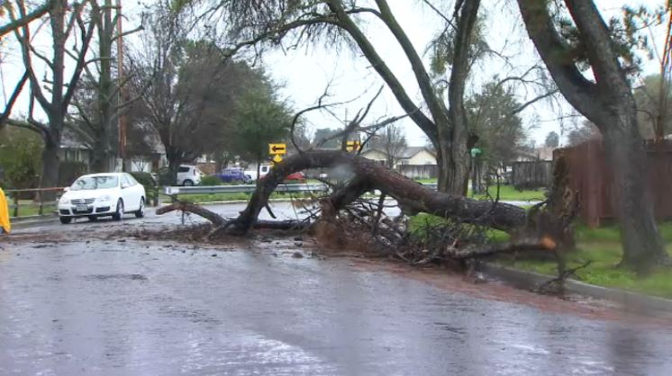 Tree falls down in Clovis after overnight winds and rain