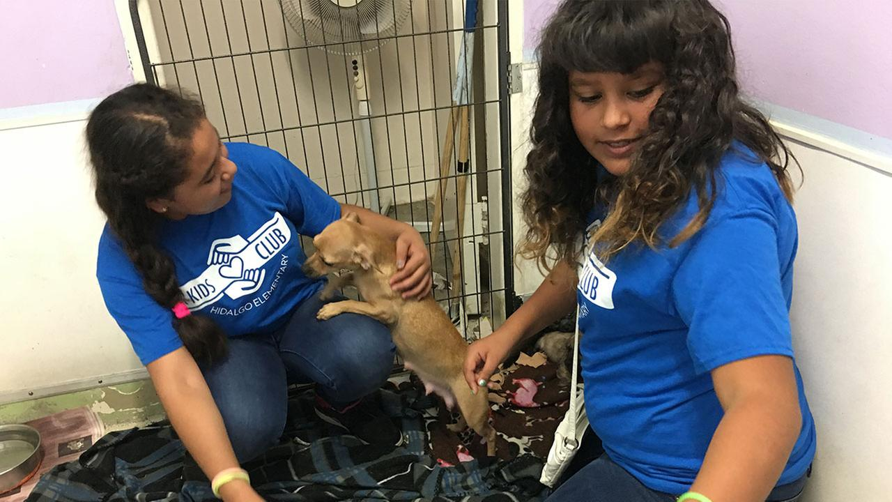 Hidalgo Students to the Rescue at Pet Adoption Center