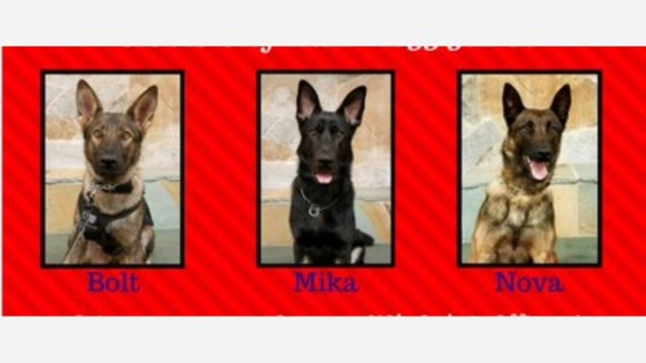 WHO LET THE DOGS OUT: Clovis Police welcome three new K-9 officers to the team