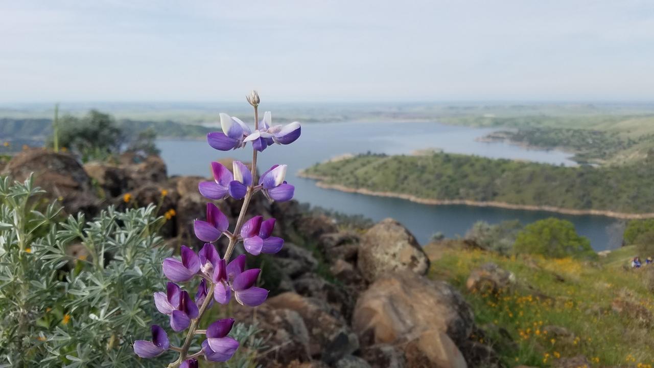 Wildflower on Pincushion Peak