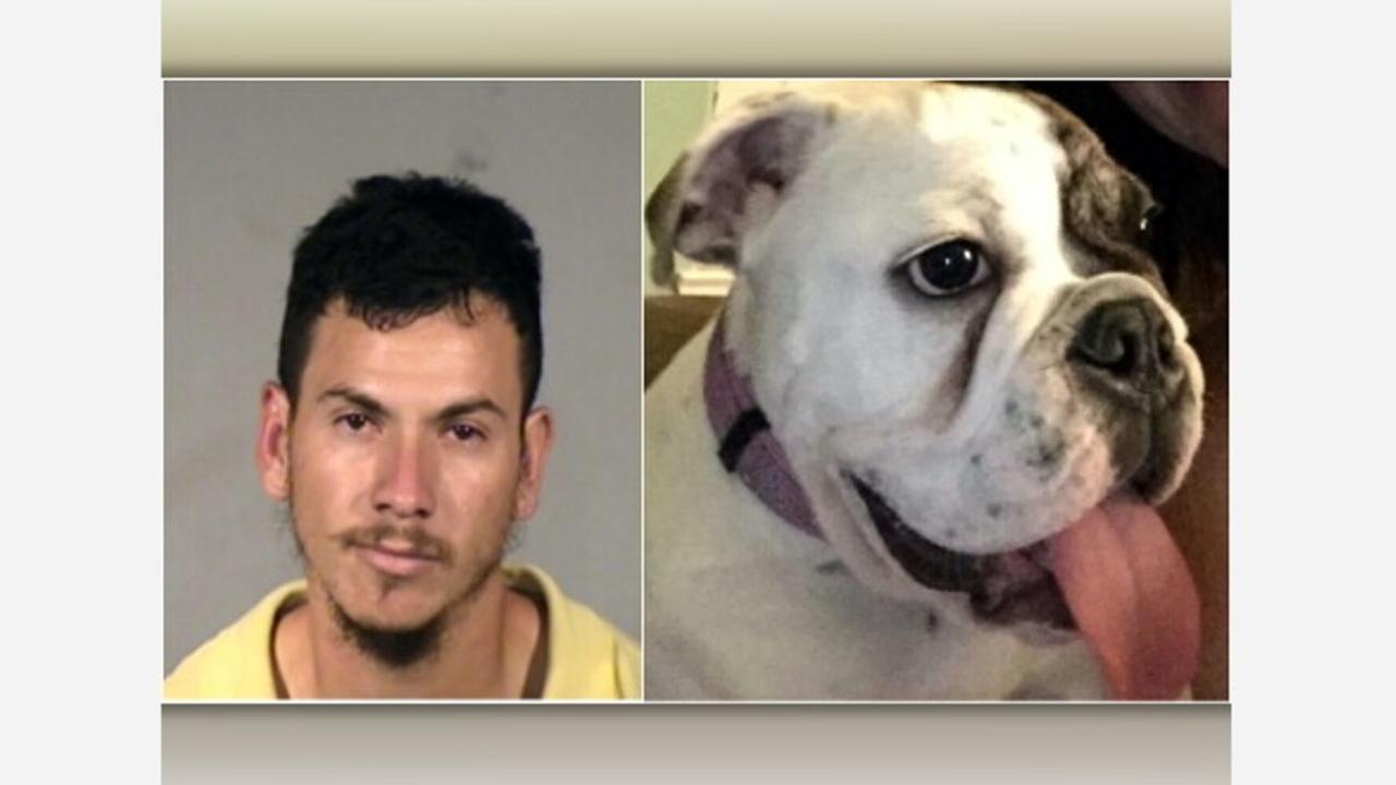 Pet thief punished for burglaries targeting bulldogs