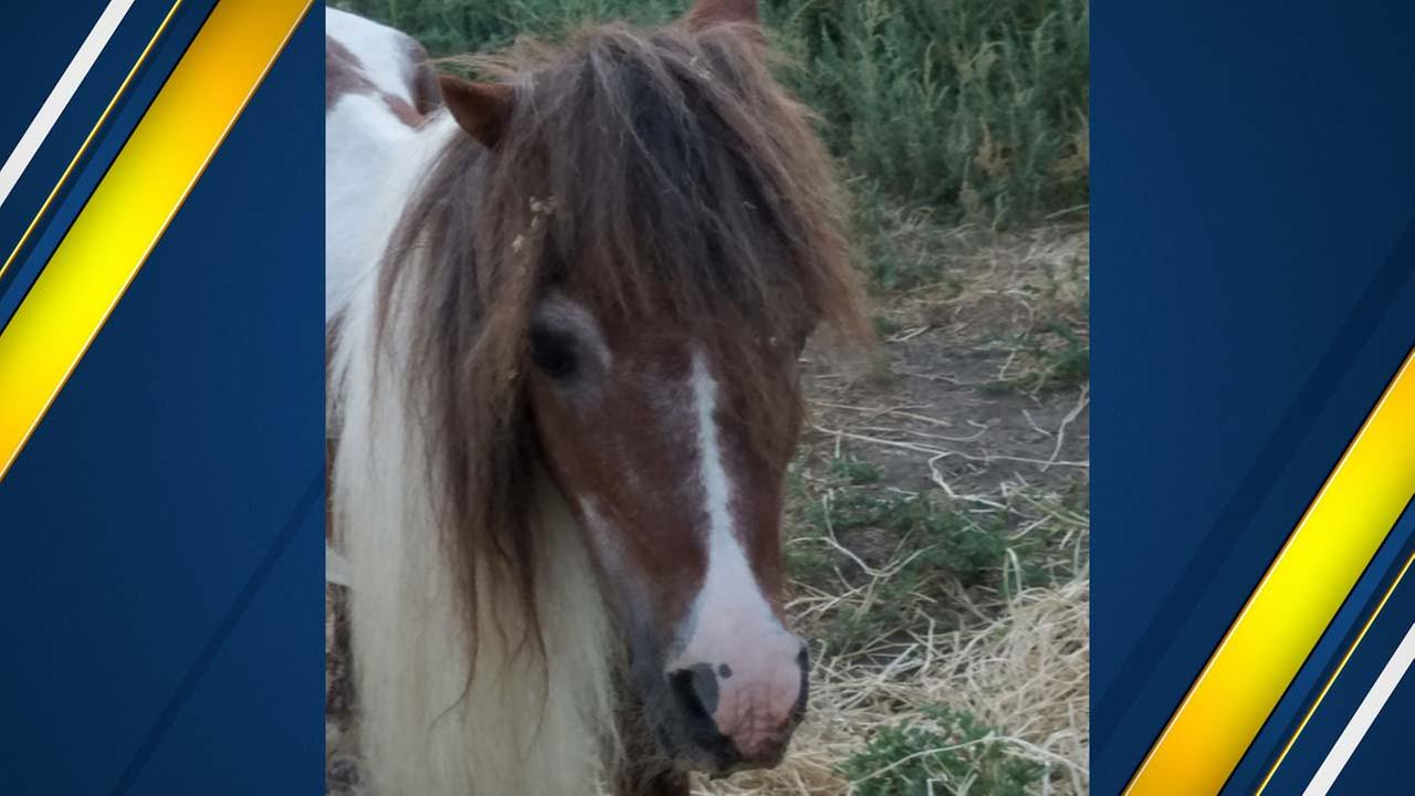Neglected mini-pony removed from Visalia home
