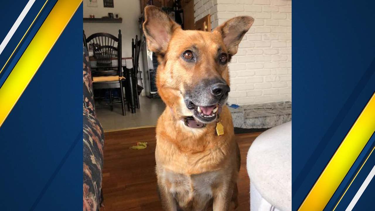 Hi! My name is Lassie!