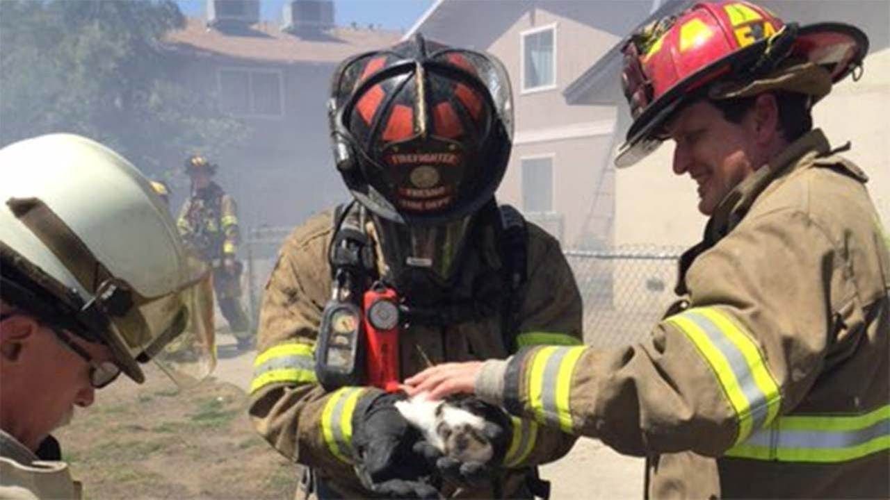 E Clay fire, fire is contained and crews are in overhaul mode. Fresno Fire crews rescued a kitten.