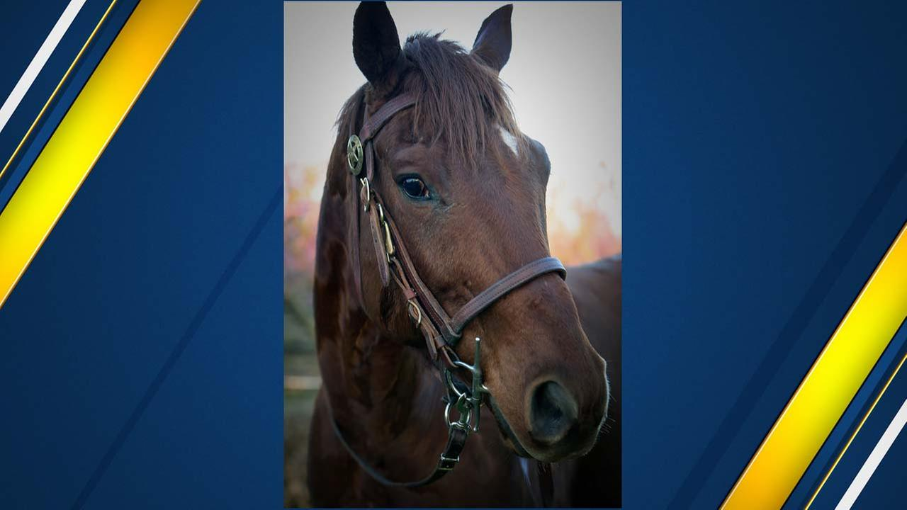 Fresno County Sheriff's Office names new patrol horse after public campaign for names