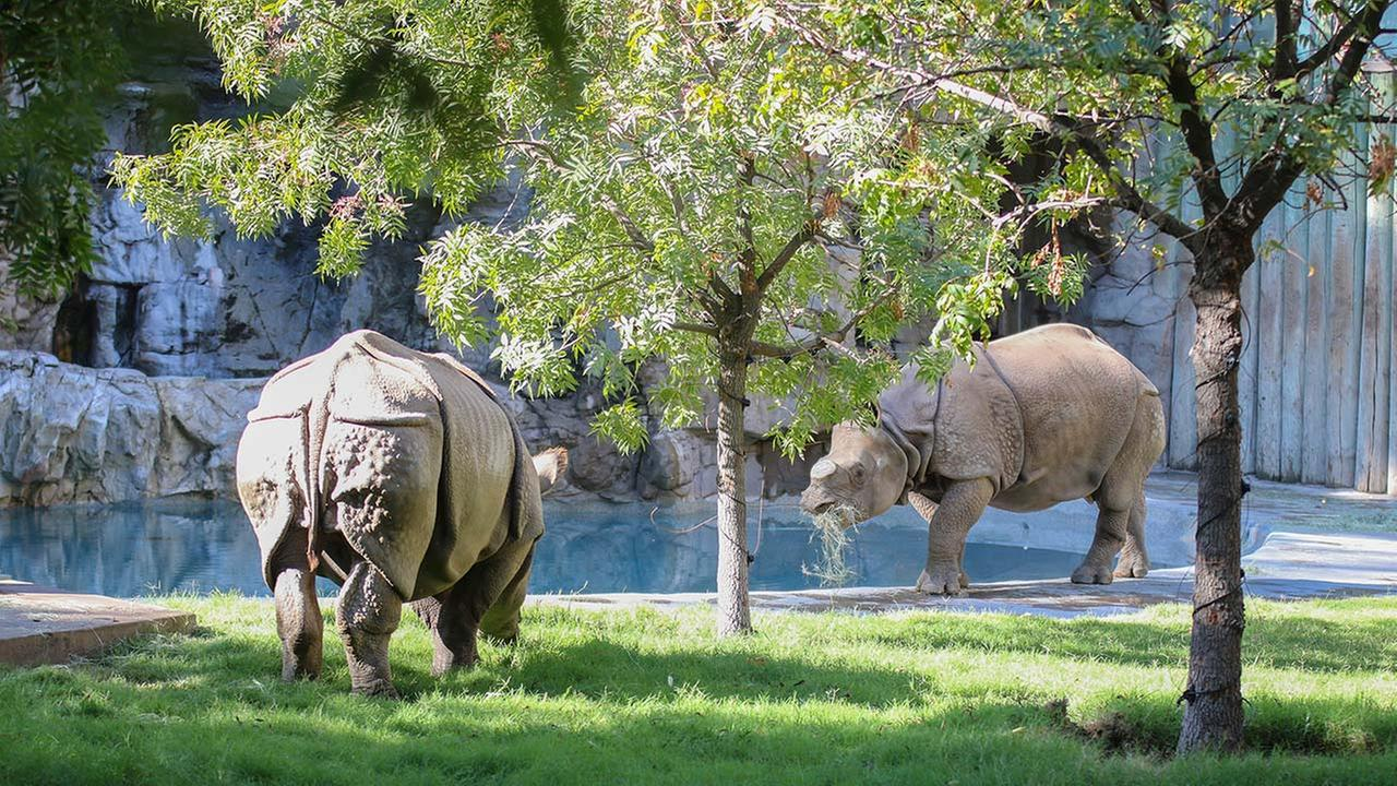 Fresno Chaffee Zoo receives 2 greater one-horned rhino