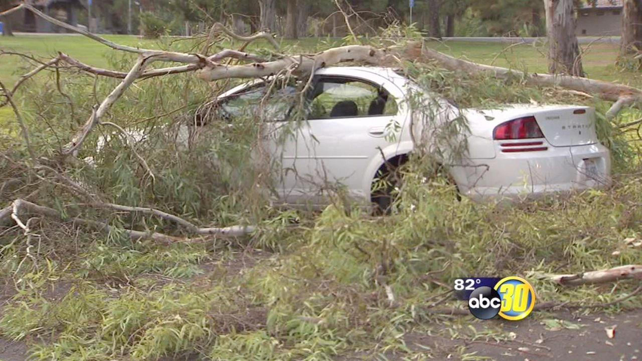 Large tree branch falls on car in Roeding Park