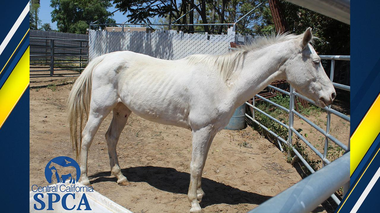 Horse taken from a property in Sanger