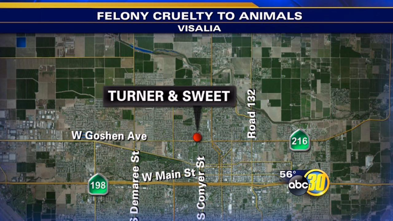 Visalia man kills small dog and threw it in the street, police say