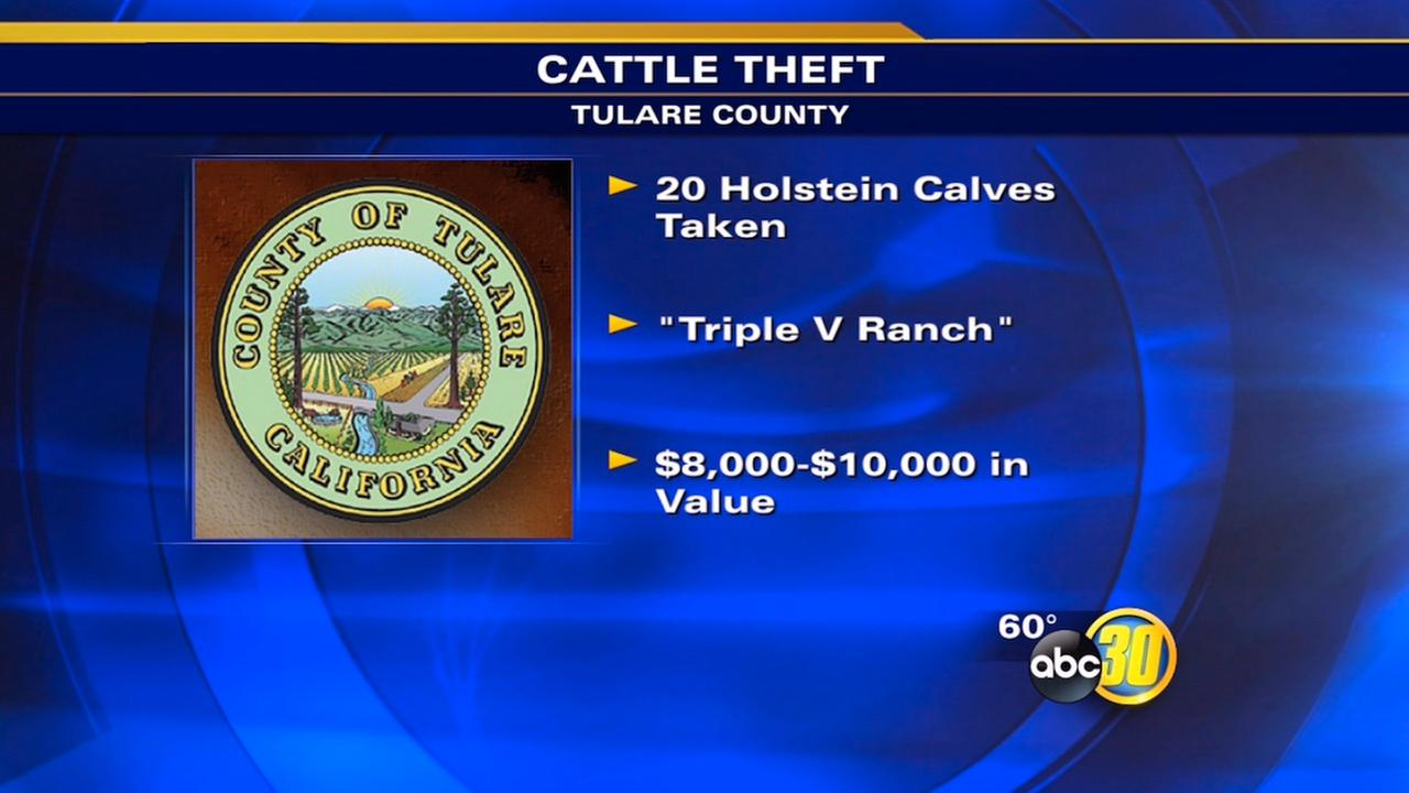 20 Holstein calves stolen from Tulare County ranch