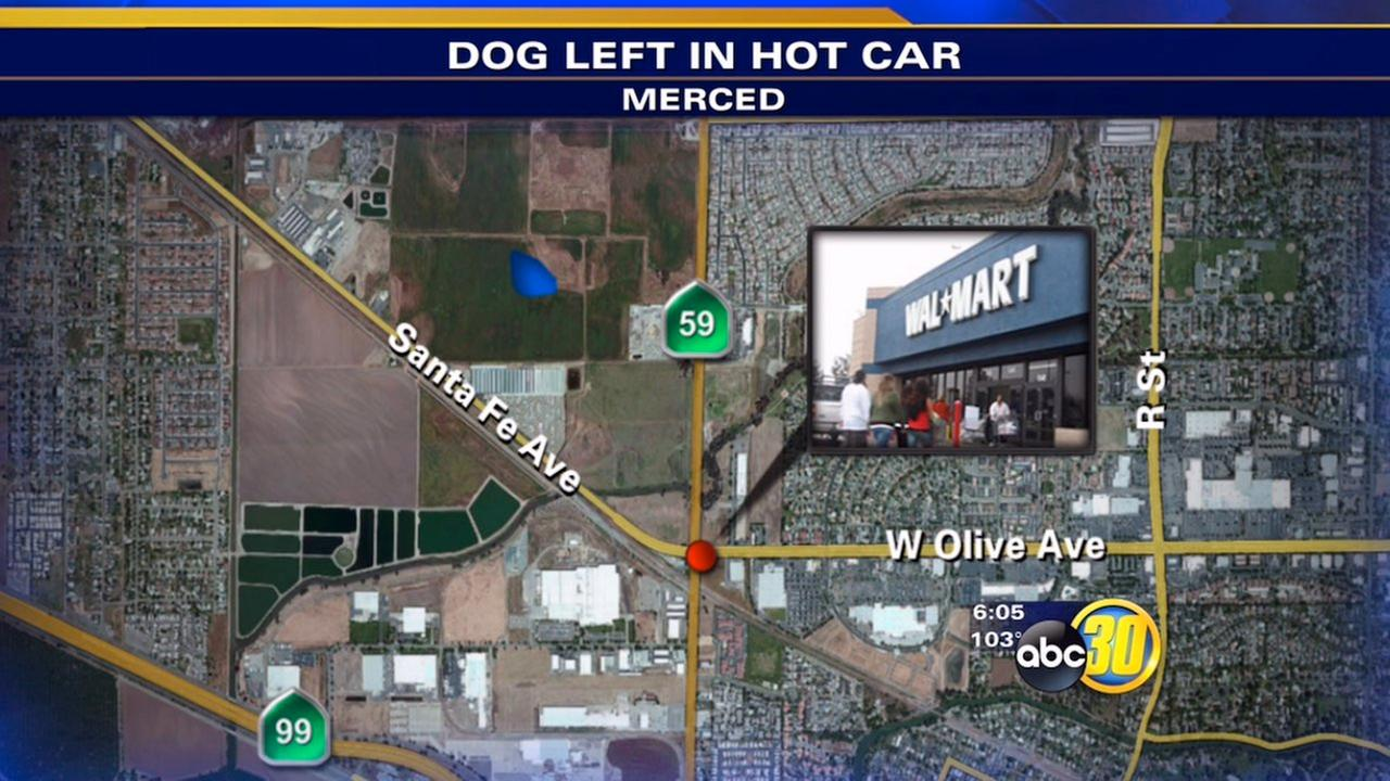 2 women face charges after puppy left in hot car, Merced police say
