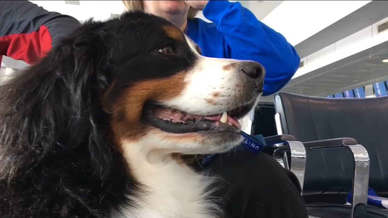 United Airlines is changing its policies on emotional support animals on its flights.