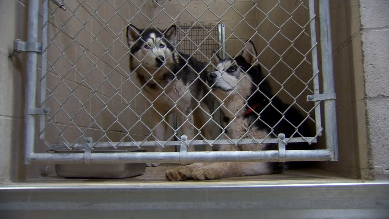 A northeast Fresno family is mourning the deaths of three dogs - after their neighbors Huskies entered their home and brutally attacked their pets.