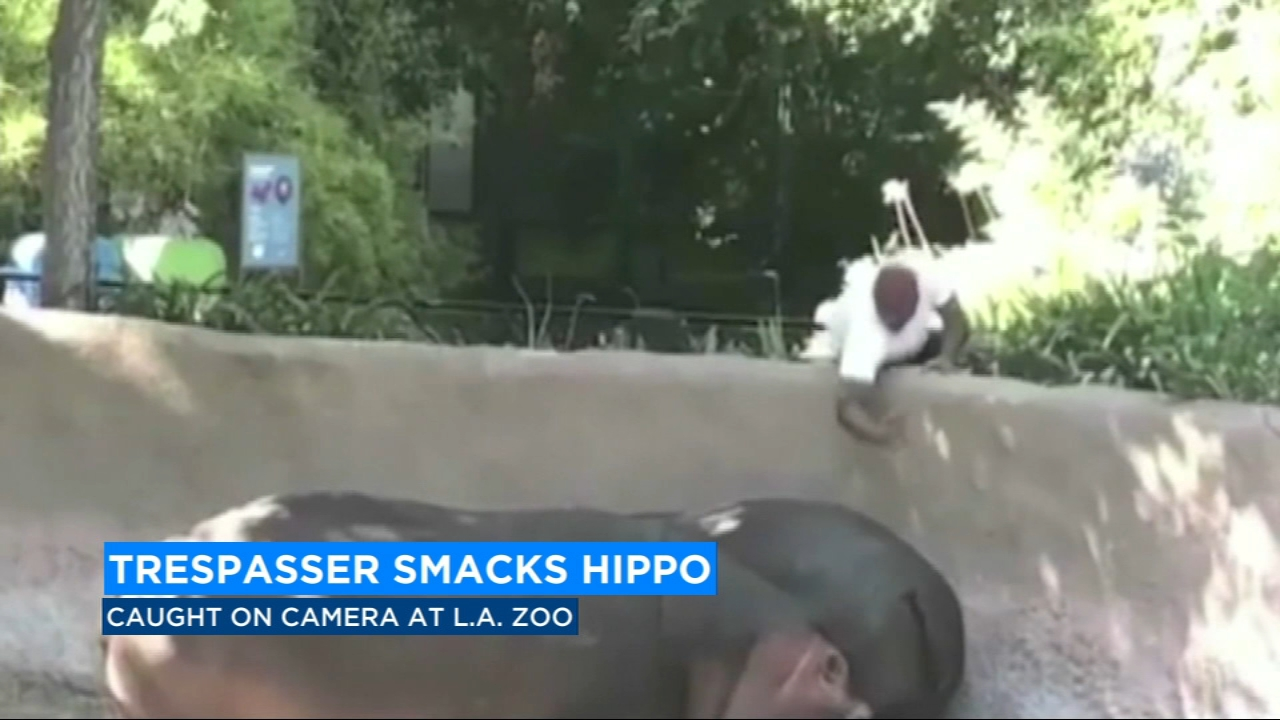 A man is facing trespassing charges after he got extra-close to the hippos at the Los Angeles Zoo.