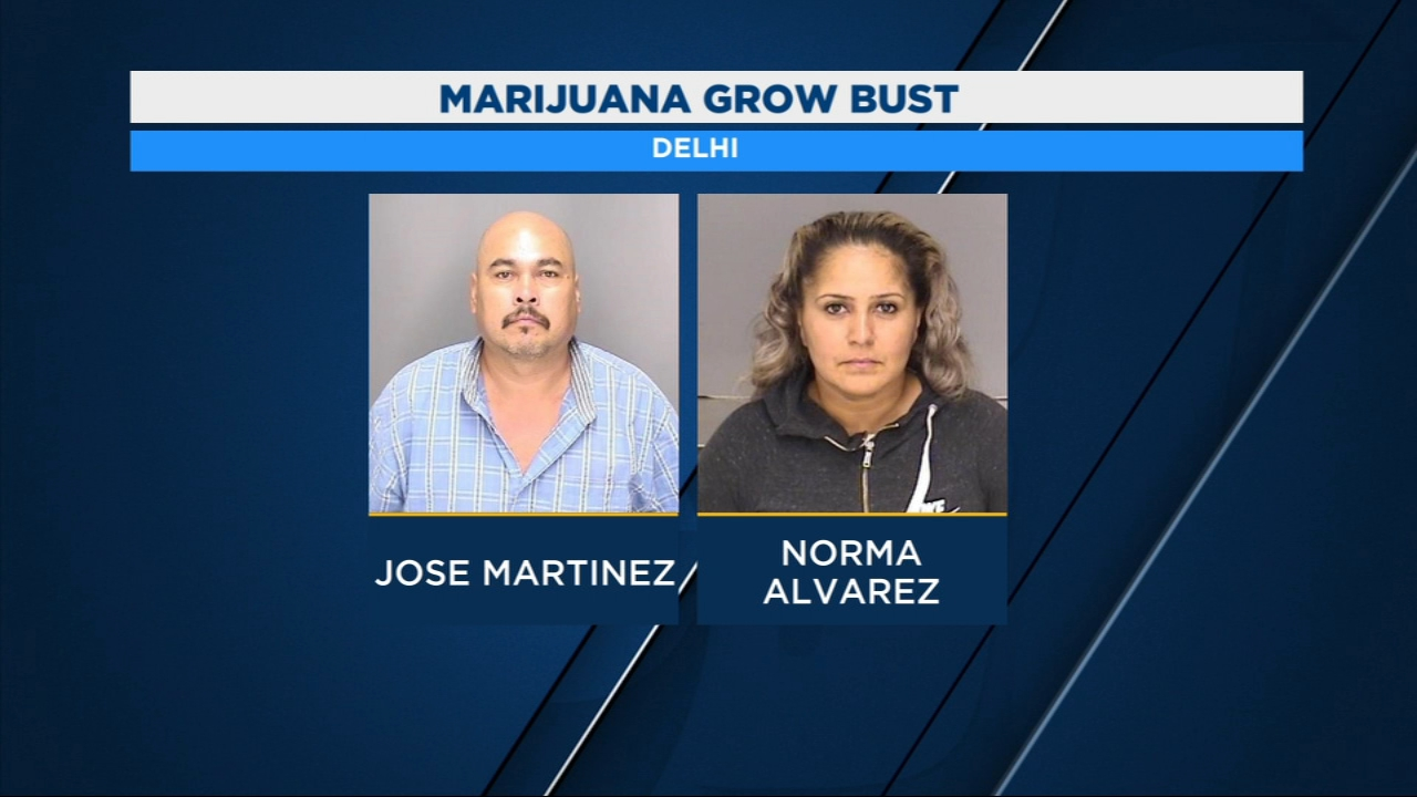 Two people in Merced County were taken into custody after sheriffs deputies found 12 large marijuana plants in their backyard.