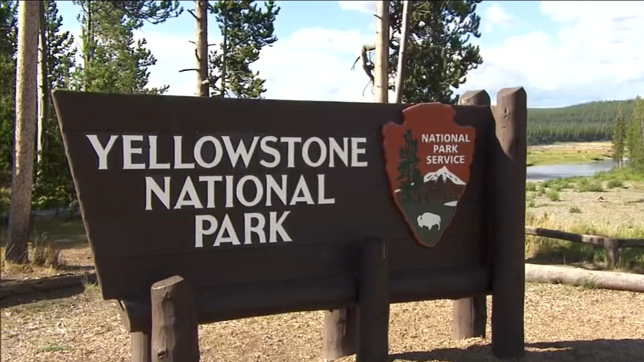 The family of four was hiking along the Divide Trail southeast of Old Faithful when the bear charged from the vegetation.