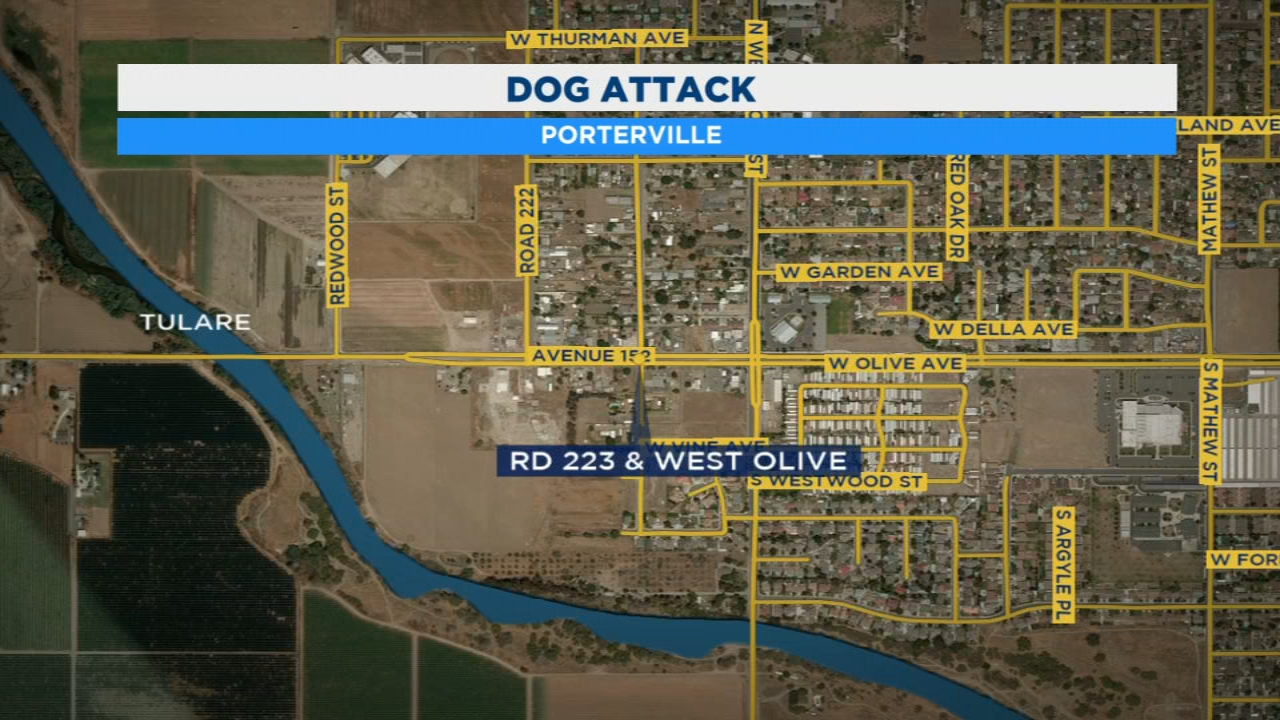 One man is recovering after being attacked by two pitbulls in Porterville.