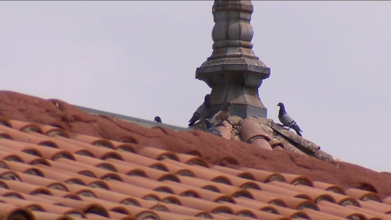 Hanford will use a falconry-based hazing program to displace and redirect crows from the downtown area.