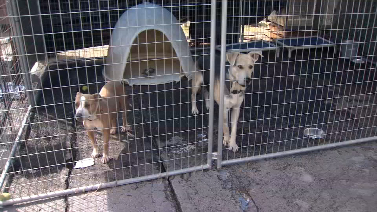 The Fresno Humane Animal Services has contracted with the county to run the temporary shelter.