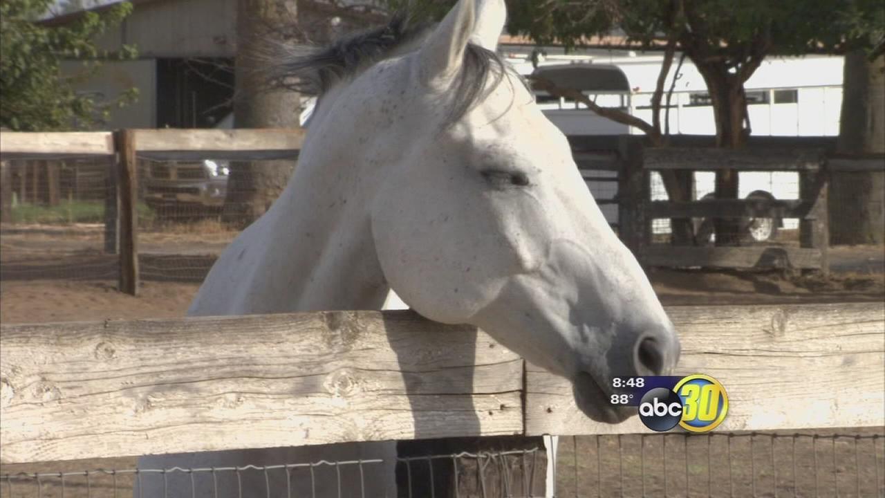 Western Milling recalls Western Blend Horse Feed