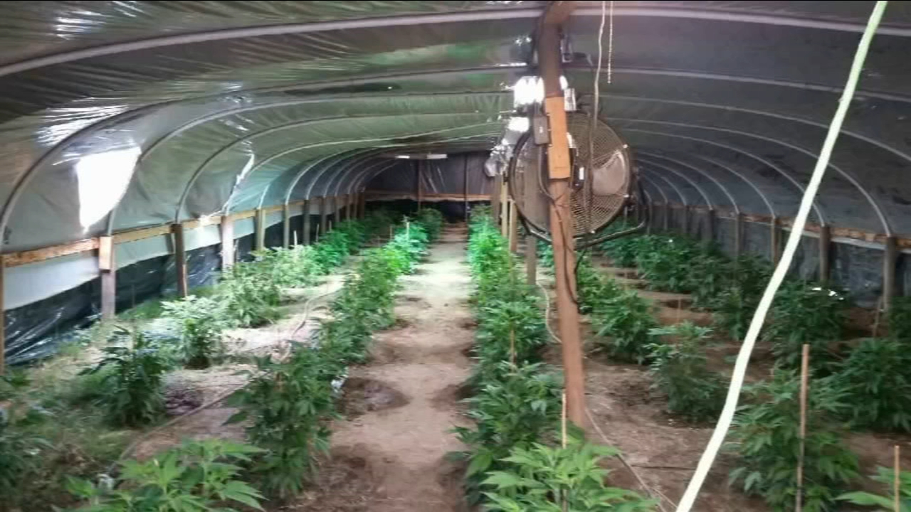 Tulare County Sheriffs office continues fight against large illegal pot grows