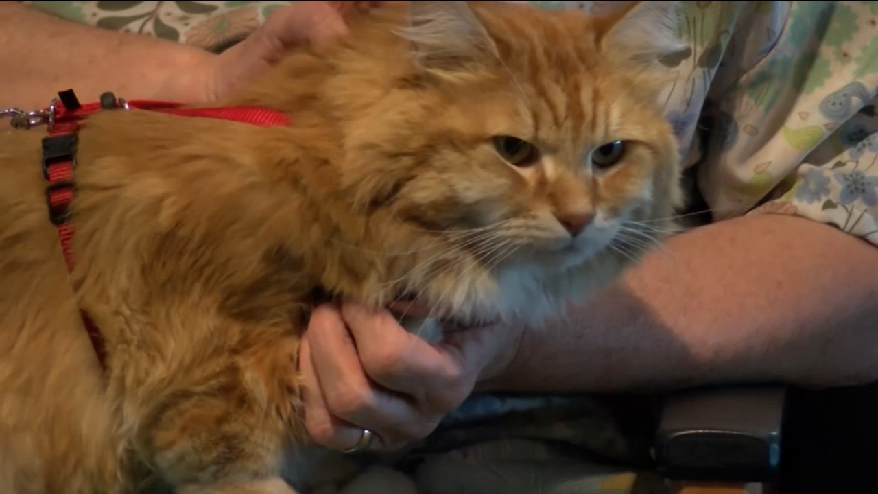 Cat strays from home, found 900 miles away on year later