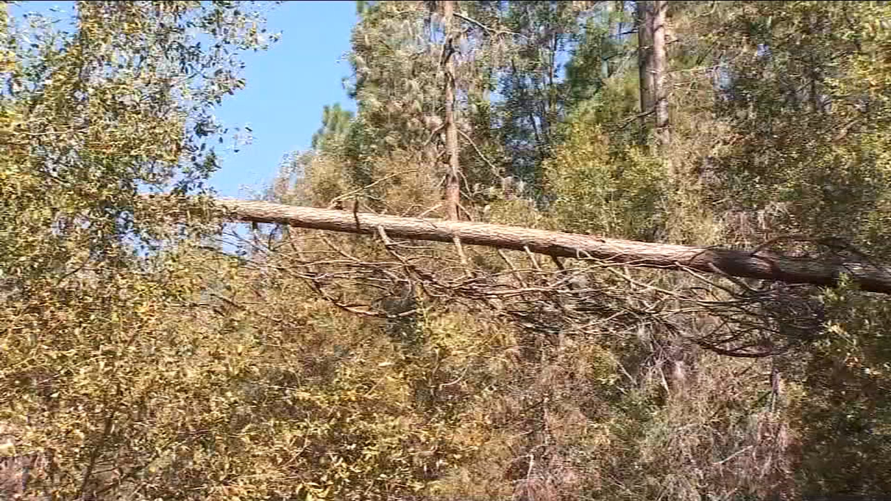 Wind cause damage in Bass Lake