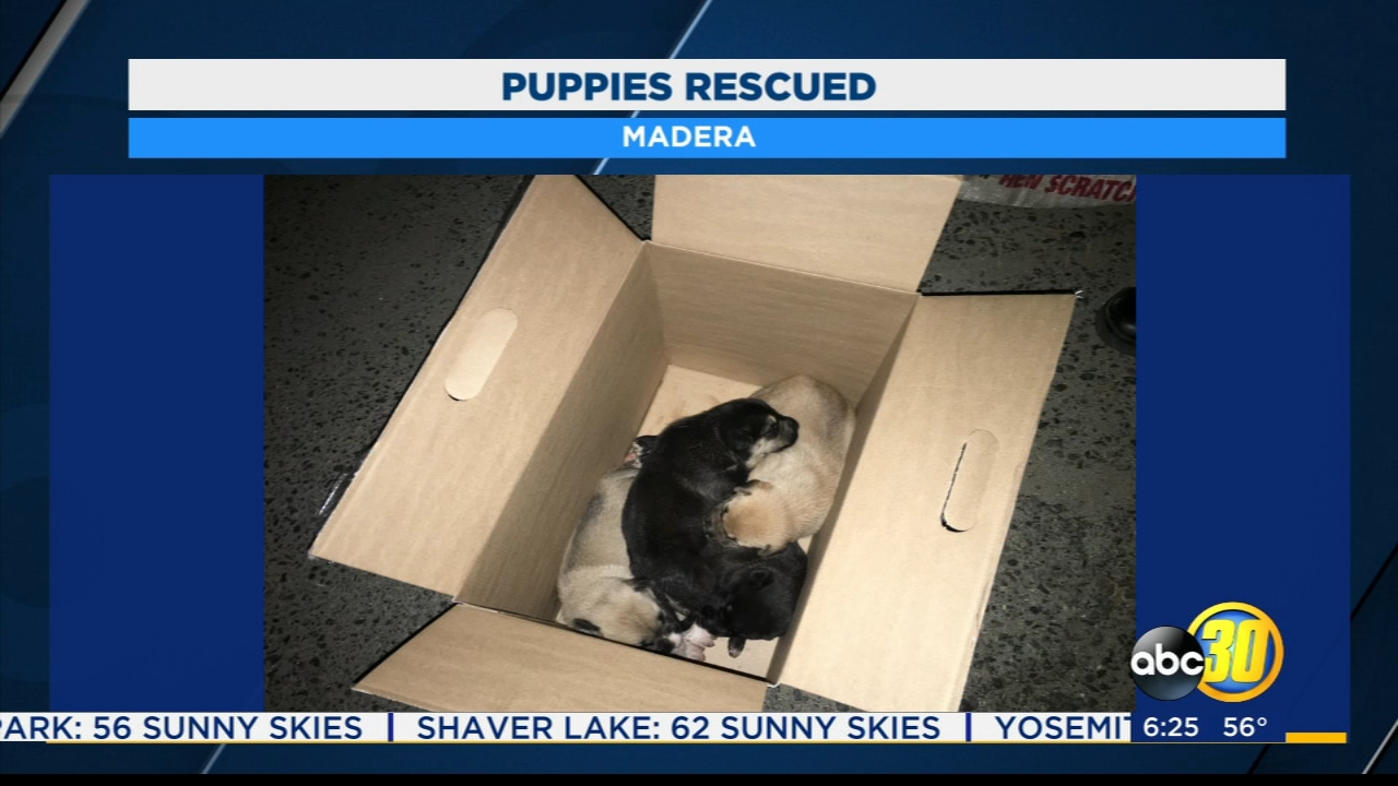 Two Madera men rescue puppies left in trash bin