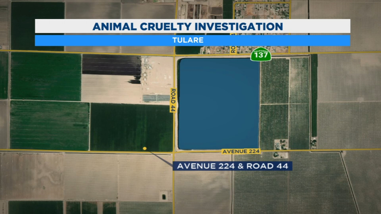 Tulare County sheriffs deputies have launched an animal cruelty investigation after finding a dead pony tied to a telephone pole.