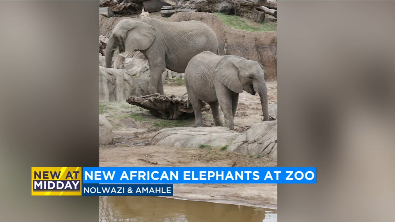 New African Elephants at Fresno Chaffee Zoo