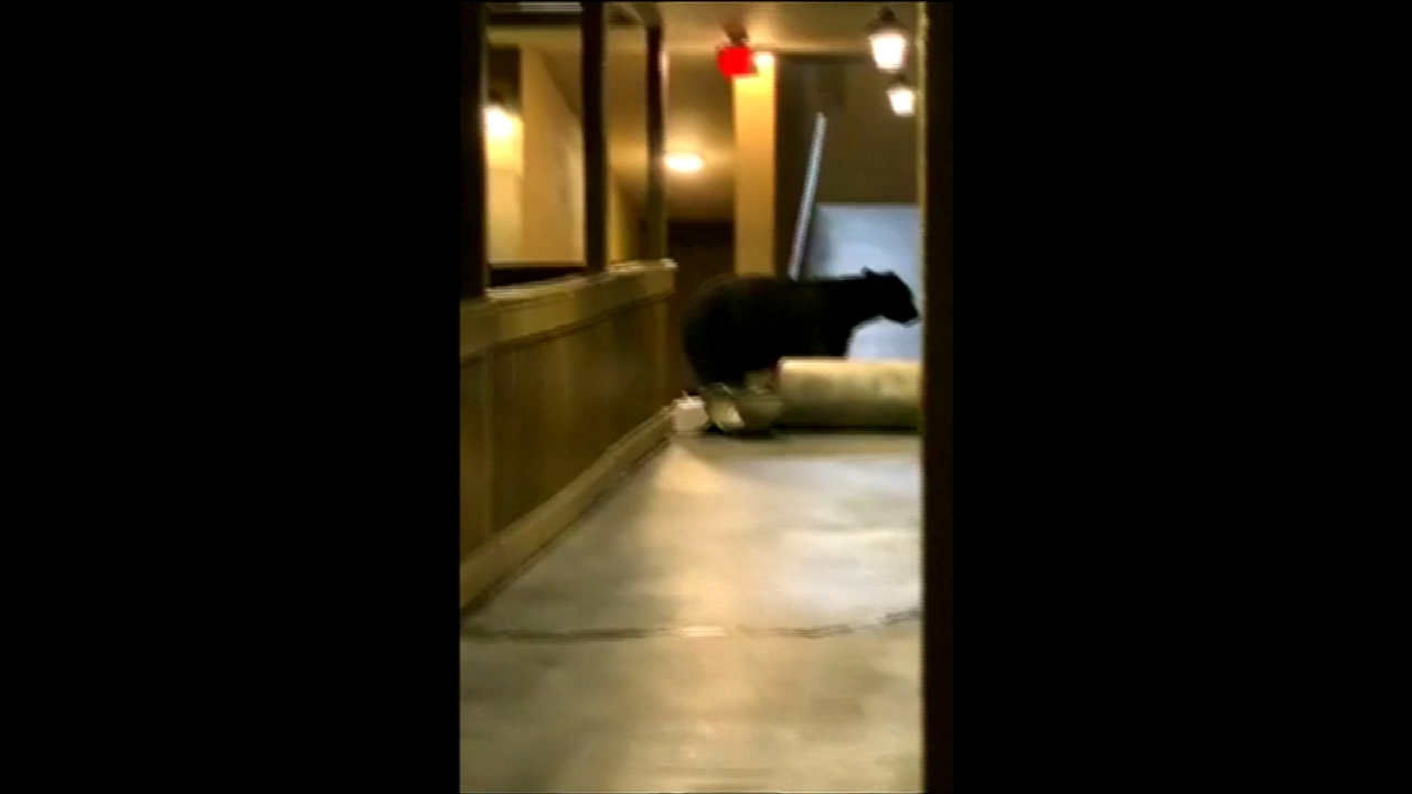 VIDEO: Bear spotted in hotel by guest in Tennessee