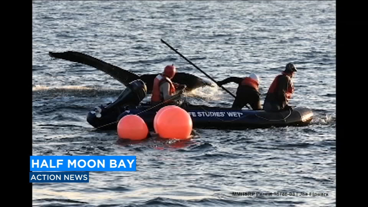 Whale rescued in Half Moon Bay