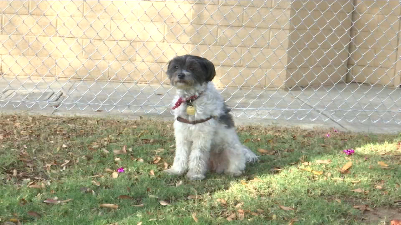 The Bob Blecher Dog Park officially opened their gates for four-legged friends and their owners to enjoy.
