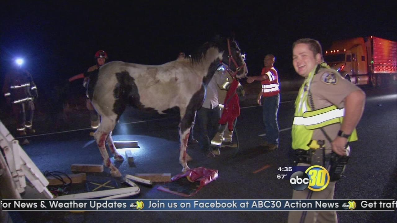 Horse trailer overturns on Highway 99
