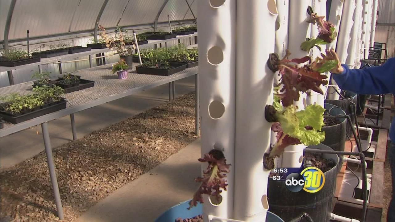 Sanger High students using unique techniques to grow food