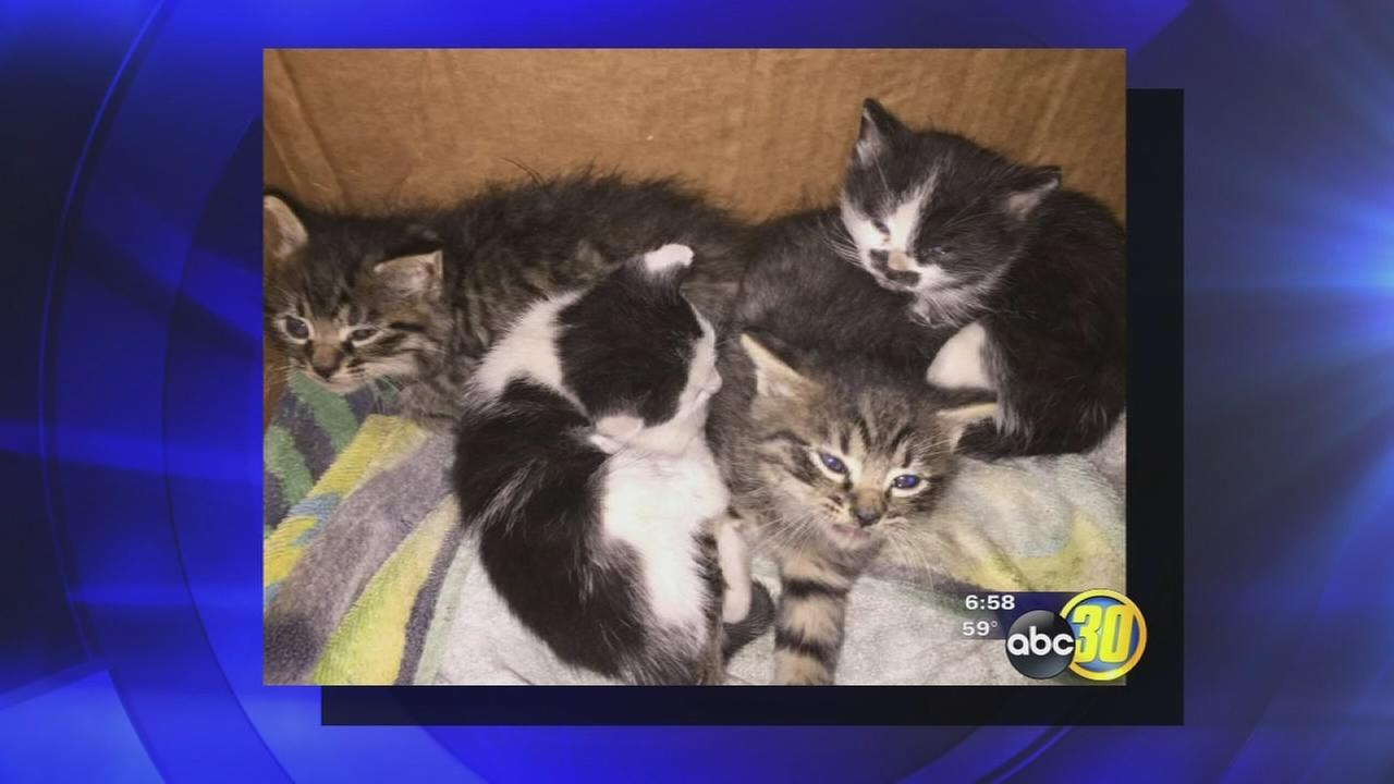 College teacher finds kittens stuck in her car