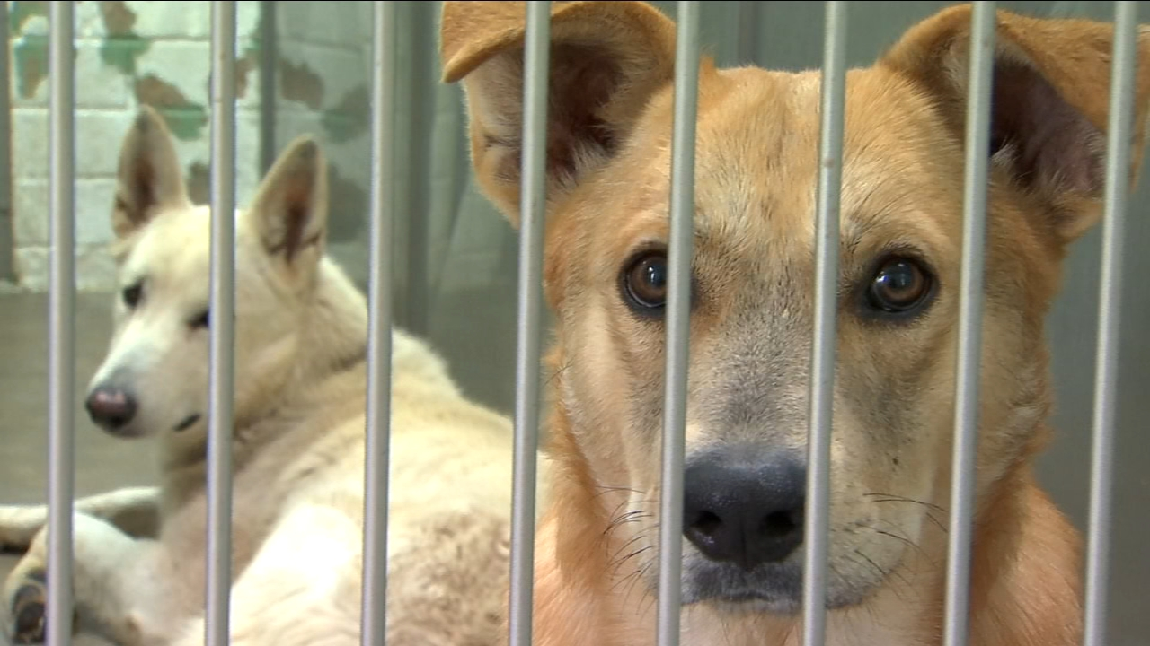 From now until Monday the adoption fees for dogs will be $120 and $60 for cats.