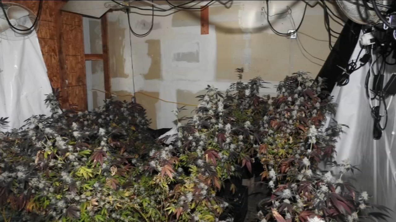 Home invasion appeared to target marijuana grow