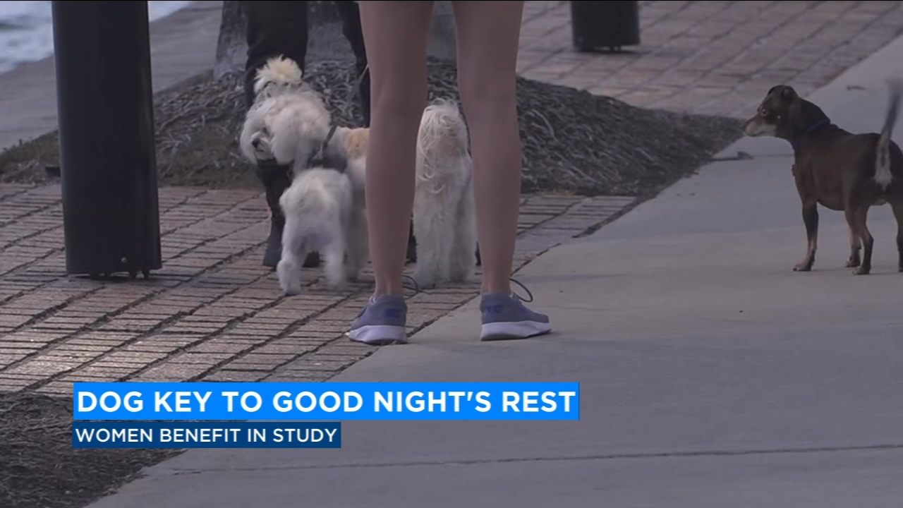 They scratch, move and snore -- but a recent study shows women who sleep with their dogs get a better nights rest.