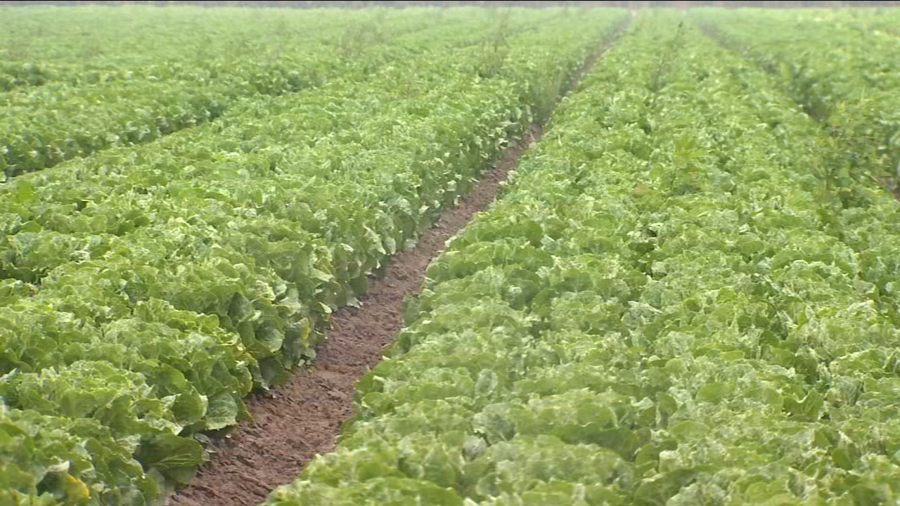 Romaine lettuce production continues, but local growers still frustrated at CDC advisorys damage to business