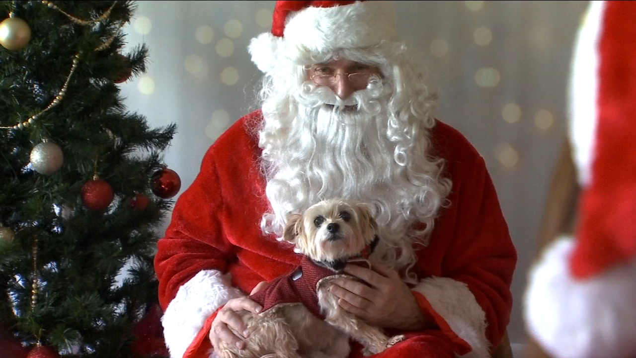The furriest members of the family were the stars of a holiday tradition at Miss Winkles in Clovis.