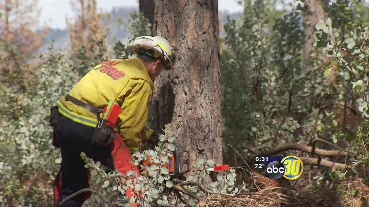 Bark Beetle epidemic keeping Cal Fire working around the clock