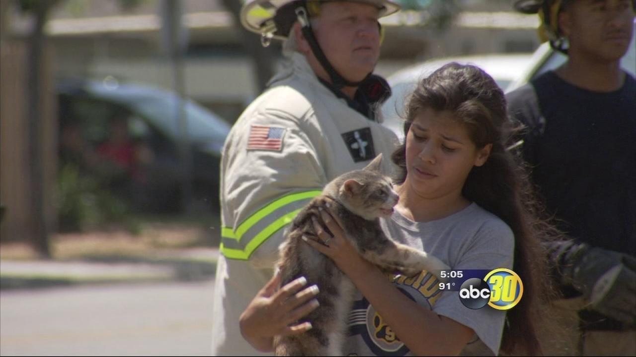 051316-5pm-kfsn-pet-rescue-vid