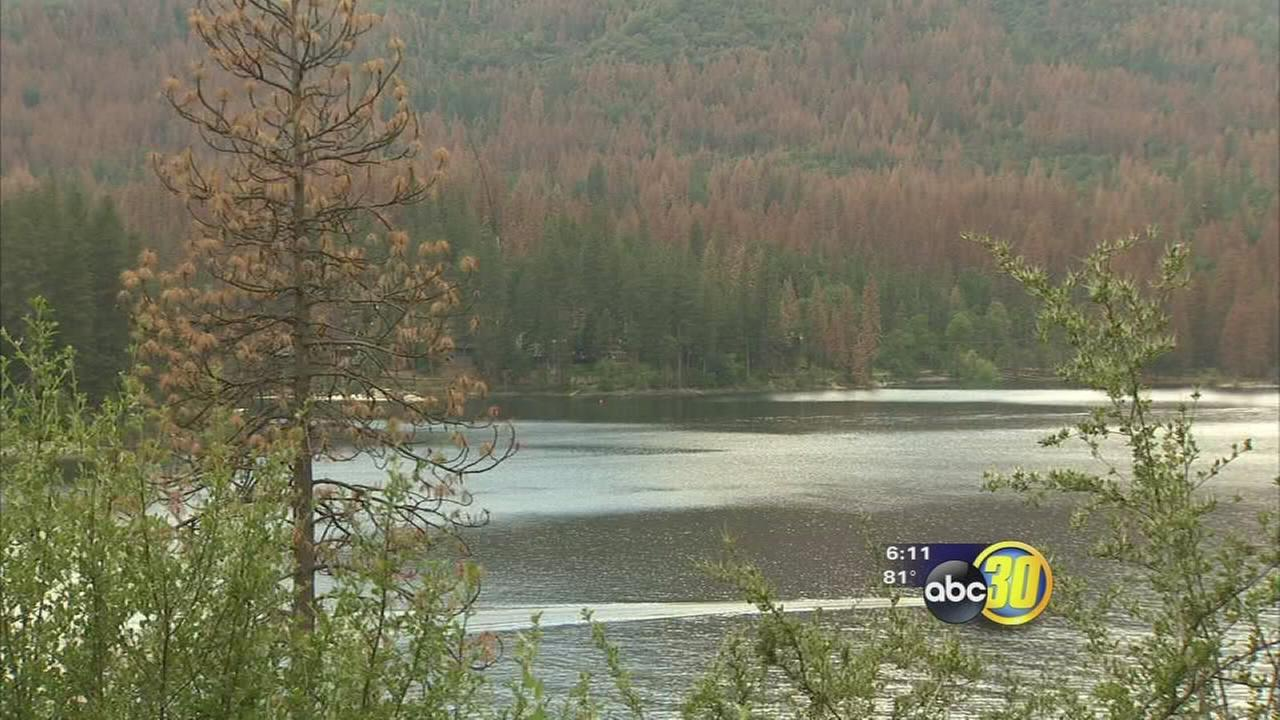 Campsites and trails closed at Bass Lake due to dead trees caused by Bark Beetles