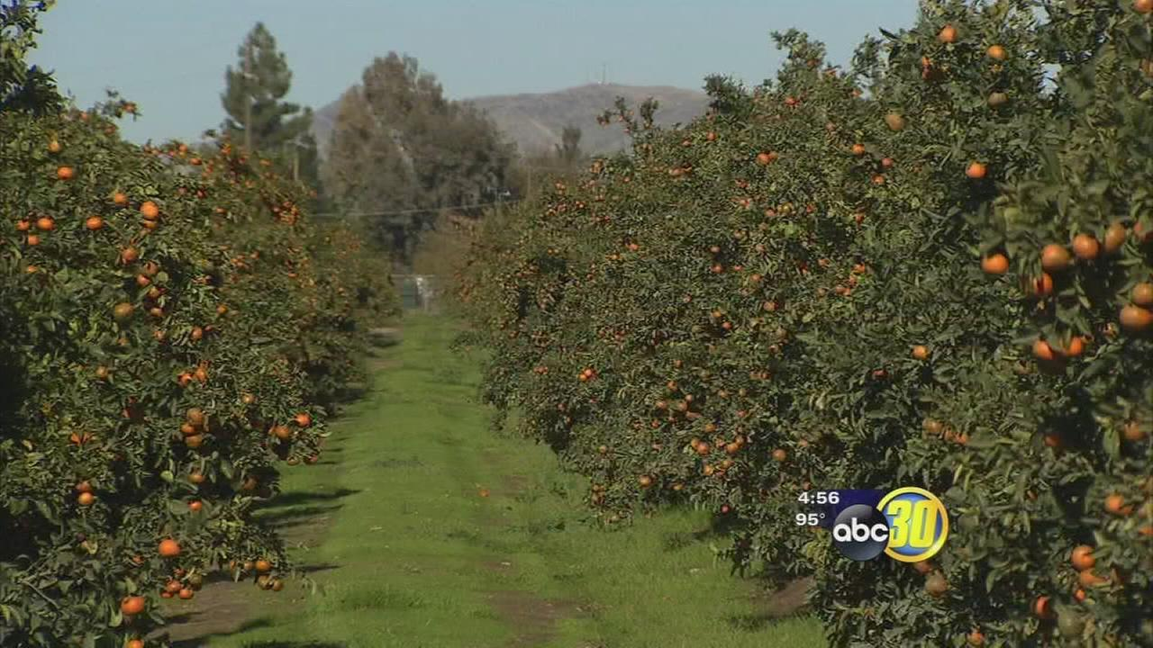 Recent ag reports showing Tulare County still on top