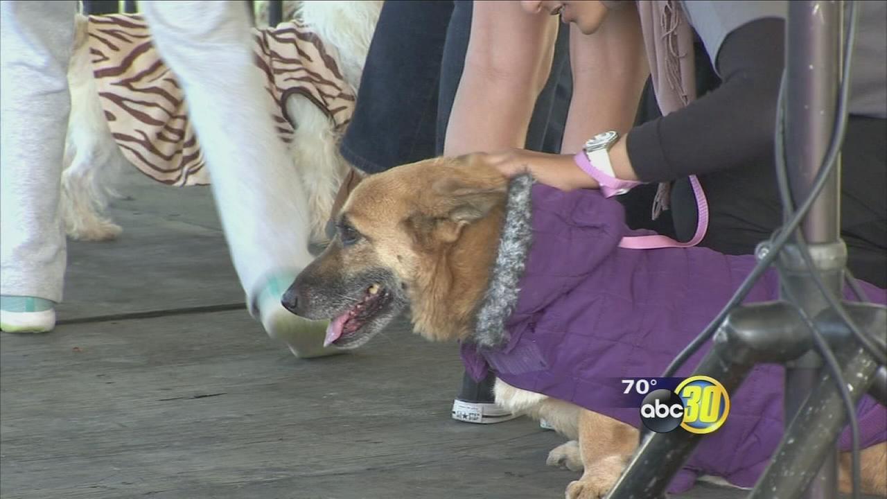 Valley Animal Center holds Halloween-themed fundraiser